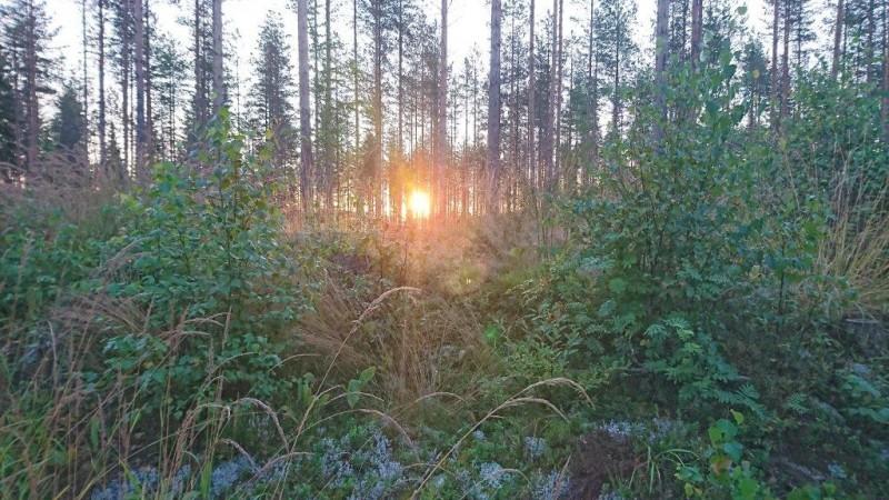 Auringon nousu